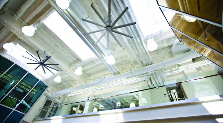 A View from the Greenhouse Space Showcasing the Skylights